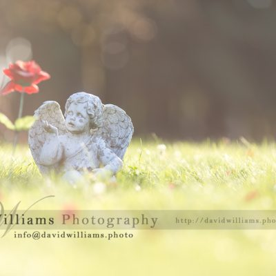 Landscape Cherub Flower David Williams Photography
