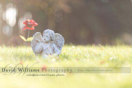 Landscape Cherub Flower David Williams Photography