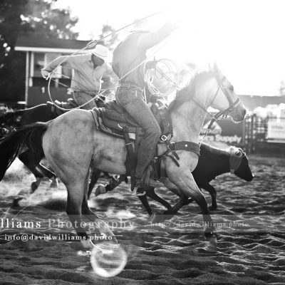 Photo, Photography, Image, Print, Canvas, Metal, Black and White, B&W, Rodeo, Cowboy