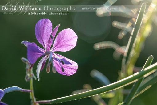 Photo, Photography, Image, Print, Canvas, Metal, Flower, Purple Flower