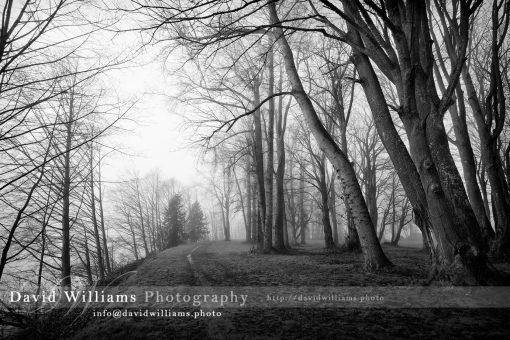 Photo, Photography, Image, Print, Canvas, Metal, Black and White, B&W, Path, Fog, Trees