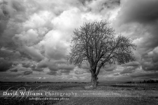 Photo, Photography, Image, Print, Canvas, Metal, Black and White, B&W, Tree, Cloud, Field